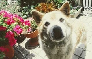 犬,花,動物,かわいい