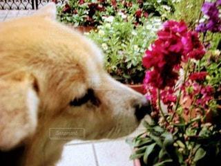 犬,花,動物,屋外,かわいい,景色