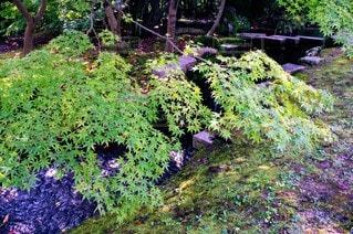 自然,公園,森林,屋外,緑,景色,樹木,新緑,ガーデン