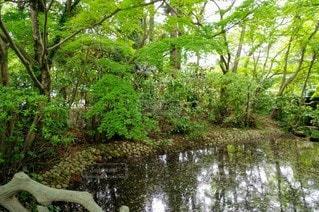 自然,公園,屋外,湖,樹木,草木,ガーデン
