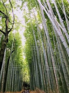 風景,森林,屋外,樹木,竹,草木