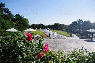 空,花,屋外,景色,樹木,噴水,草木,ガーデン