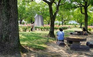 男性,風景,公園,花,屋外,ベンチ,草,樹木,人,地面,草木