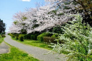 風景,花,春,屋外,景色,樹木,新緑,さくら