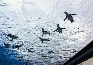 自然,風景,動物,鳥,水族館,水面,ペンギン,空飛ぶペンギン