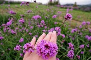 花,屋外,ピンク,紫,手,指輪,草,草木,ガーデン