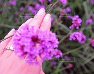 花,ピンク,紫,手,指輪,景色,鮮やか,草木,ガーデン,フローラ