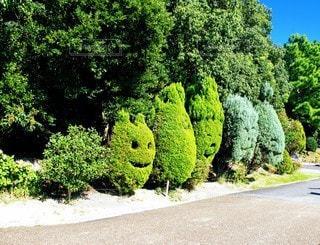 空,屋外,樹木,淡路島,草木,ガーデン,低木,ヘッジ