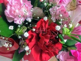 花,花束,花びら,鮮やか,カーネーション,母の日