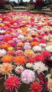 風景,花,鮮やか,カラー