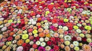 風景,花,景色,鮮やか,カラー,色,草木,ガーデン