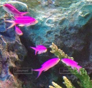 魚,水族館,水面,葉,鮮やか,水中,カラー