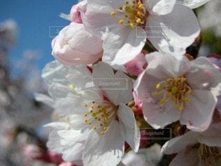 花,桜,景色