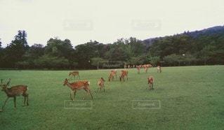 鹿の写真・画像素材[3211021]