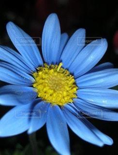 花のクローズアップの写真・画像素材[3211214]