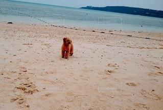 犬,自然,海,空,動物,屋外,ビーチ,砂浜,水面,海岸,トイプードル