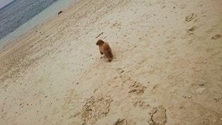ビーチを歩いている犬の写真・画像素材[3211427]