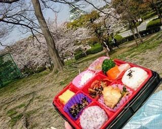 食べ物,桜,お弁当,屋外,草,樹木,お花見,大阪城