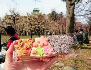 食べ物,桜,屋外,草,デザート,果物,樹木,人,大阪城,梅林,バームクーヘン