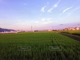 自然,風景,空,屋外,緑,草原,雲,田舎,景色,草,新緑,田んぼ,畑,草木,日中,クラウド,ファーム,開く