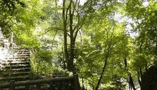 空,公園,森林,屋外,樹木,新緑,ジャングル,日陰,草木