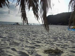 自然,海,空,屋外,砂,ビーチ,砂浜,水面,海岸,樹木,ヤシの木,草木,日中
