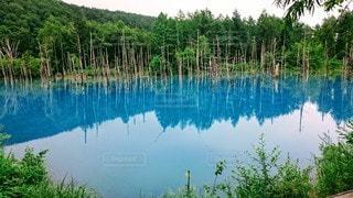 自然,風景,空,森林,屋外,湖,川,水面,池,北海道,景色,反射,樹木,大地,青い池,草木