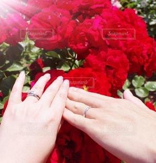 花,屋外,赤,手,バラ,指輪,景色,人,夫婦,草木,ガーデン