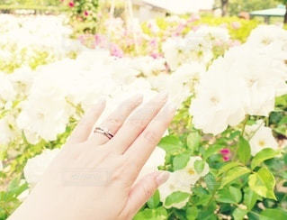 花,屋外,手,バラ,指輪,ガーデン