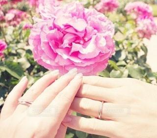 花,ピンク,花束,紫,手,バラ,指輪,人,夫婦,草木,ガーデン