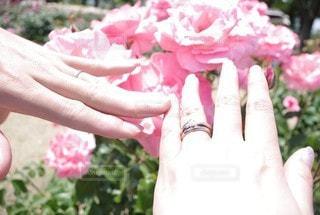 花,屋外,ピンク,手,バラ,指輪,人,夫婦,草木,ガーデン