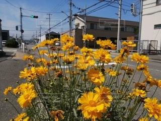 風景,空,花,屋外,散歩,黄色,道路,信号機,草木