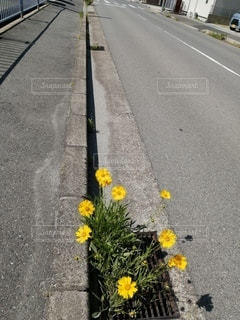 空,花,屋外,散歩,黄色,道路,道,歩道,通り,アスファルト,草木,縁石