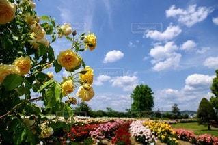 花園のクローズアップの写真・画像素材[3243153]