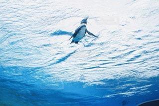 空飛ぶペンギンの写真・画像素材[3243733]