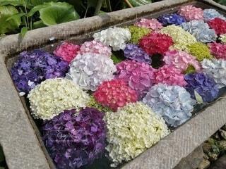 花園のクローズアップの写真・画像素材[4556664]