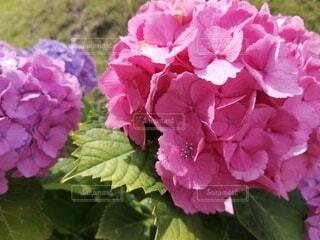 花のクローズアップの写真・画像素材[4556663]