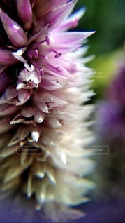 花,屋外,草木,クローズ アップ,フォトジェニックス