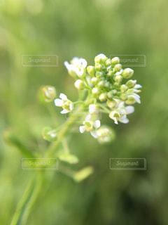 花,緑,クローズアップ,草木,フォトジェニック