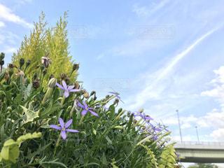 空,花,屋外,雲,紫,草木,フォトジェニックス