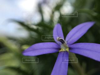 自然,空,花,屋外,紫,クローズアップ,フォトジェニックス