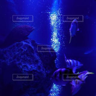 水中にての写真・画像素材[3219933]