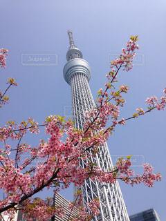 春の饗宴の写真・画像素材[3219416]