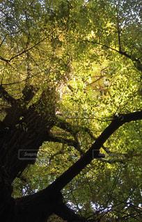 木陰の写真・画像素材[3261625]