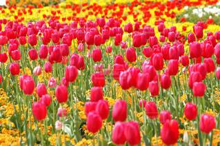 明るく元気になれる花の写真・画像素材[3264100]