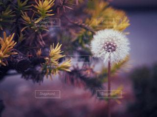花のクローズアップの写真・画像素材[3214341]