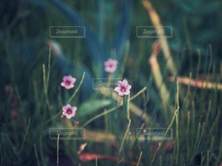 自然,花,春,ピンク,緑,景色,草木,フローラ