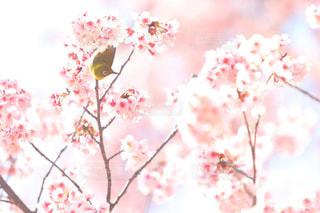 平成最期の桜。新宿より。の写真・画像素材[2003945]