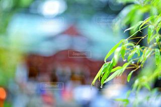風景,雨,神社,水滴,旅行,雫,玉ボケ,恵