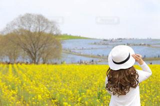 空,春,後ろ姿,菜の花,背中,旅行,ネモフィラ,色彩